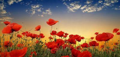 Papaveri rossi - Poesia di Agnese Giallongo