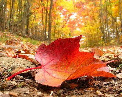 Risultati immagini per foglie d'autunno